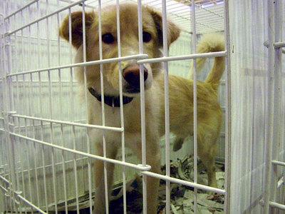 shelterdog.jpg